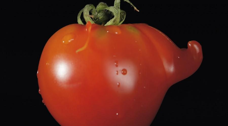 Vork nieuw kwartaalblad voor de voedselketen