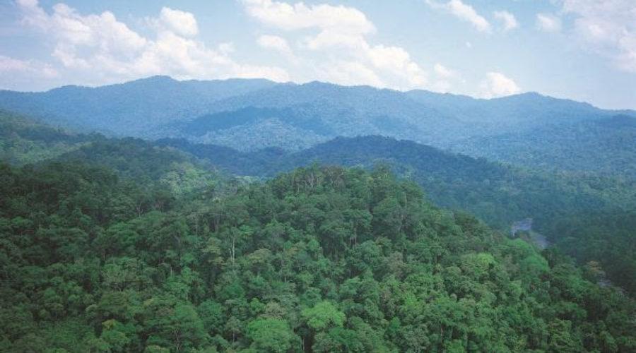 Erkenning voor duurzaam hout